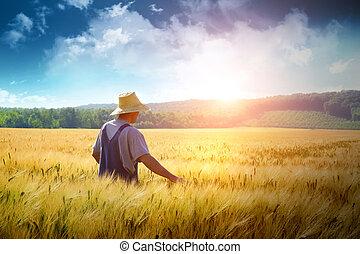 pole, pieszy, pszenica, przez, rolnik