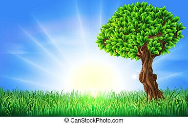 pole, słoneczny, drzewo, tło