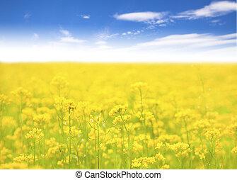 pole, tło, lazur, żółty kwiat