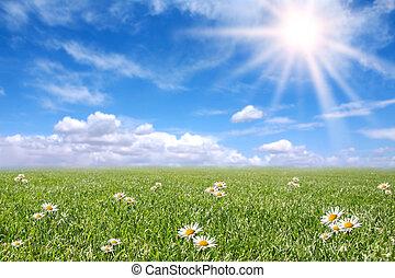 pole, wiosna, słoneczny, jasny, łąka