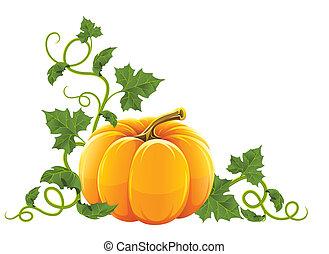 pomarańcza, dojrzały, roślina, dynia