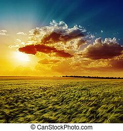 pomarańcza, pole, rolnictwo, zielony, zachód słońca
