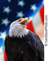 portret, amerykanka, łysy orzeł, północ, (haliaeetus, usa, tło, flag., leucocephalus)