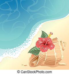 powłoka, morze, tło