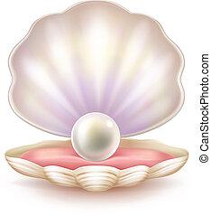 powłoka, otworzony, perła, realistyczny, wektor, drogocenny