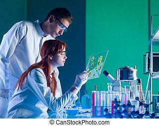 próbka, farmaceutyczny, naukowcy, badając