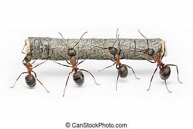 praca, mrówki, teamwork, kloc, drużyna