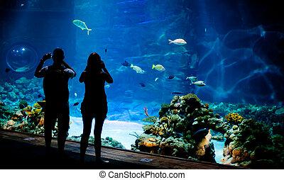 prawdziwy, podwodny, ryby, mielizna, tło