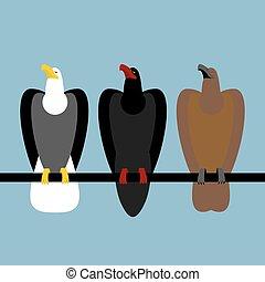 prey., beak., sokół, sokół, szybki, head., chwyta w szpony, ptaszki, komplet, orzeł, okrutny, łysy, wielki, orły, cielna, biały