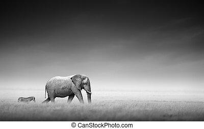 processing), (artistic, zebra, słoń