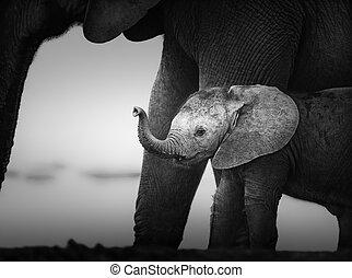 processing), krowa, (artistic, następny, słoń, niemowlę