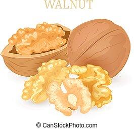 projektować, grupa, twój, walnuts