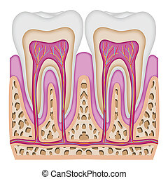 przecięcie się, ząb