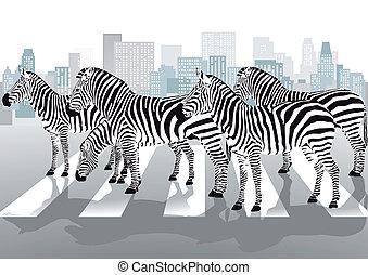 przejście, pieszy, zebry