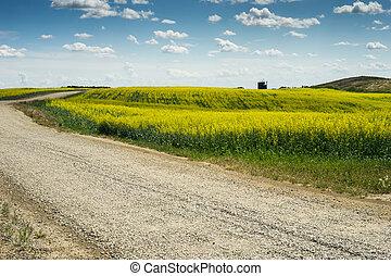 przejście, pole, żwirować drogę, canola