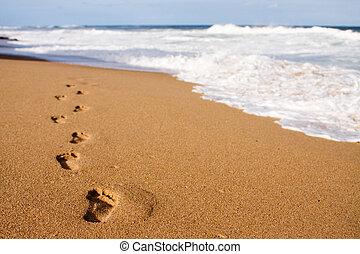przewodniczy, ślady, morze