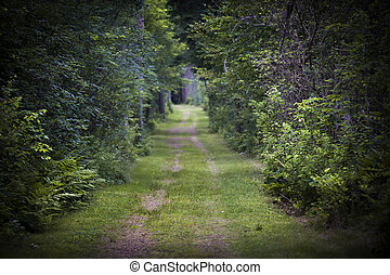 przez, las, droga, brud