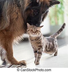 przyjaźń, razem, kot, pies, między, pets., indoors.
