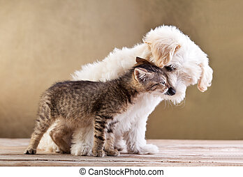 przyjaciele, -, pies, razem, kot