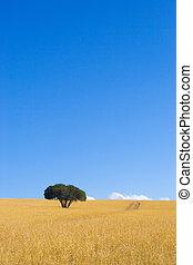 przylądek, #1, drzewa
