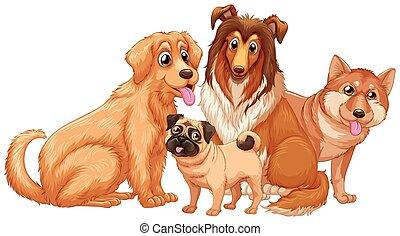 psy, szczeniak, sprytny, różny, typ
