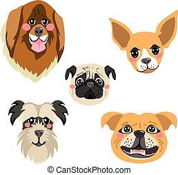 psy, zbiór, avatar