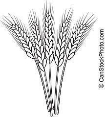 pszenica, wektor, czarnoskóry, biały, kłosie, grono