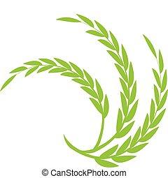 pszenica, zielony