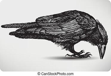 ptak, illustration., wektor, czarnoskóry, hand-drawing., kruk