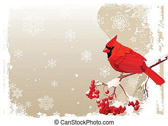 ptak, kardynał, tło, czerwony