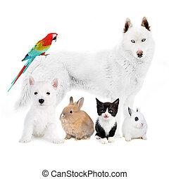 ptak, kot, -, króliki, psy, przód, biały