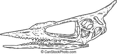 ptak, pień, kość, pterodaktyl, pterodactylus, wygasły, skamieniałość, rys, pociągnięty, wektor, skamieniały, ręka, szkielet, zwierzę, image., gatunek, sylwetka, czaszka, illustration.
