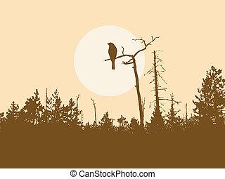 ptak, sylwetka, drzewo