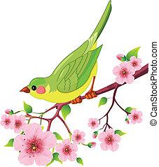 ptak, wiosna