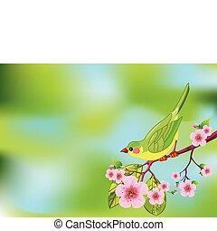 ptak, wiosna, tło