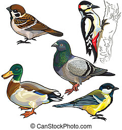 ptaszki, komplet, europa, dziki