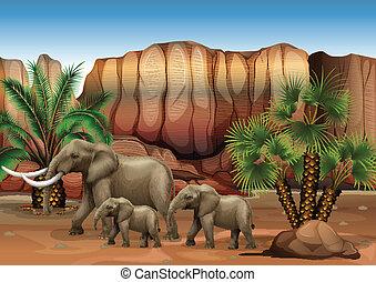 pustynia, słonie