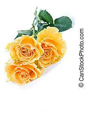 róża, żółte tło