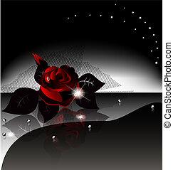 róża, czarne tło