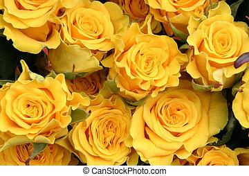 róże, żółty