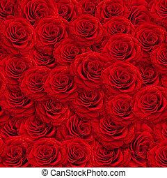 róże, backgroud