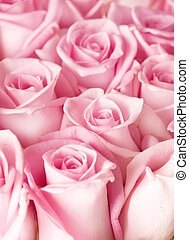 róże, tło