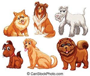 różny, gatunek, psy