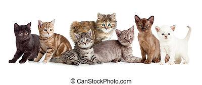 różny, koty, grupa, albo, kociątko