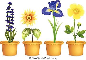 różny, kwiaty, garnki, typy