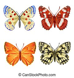 różny, motyle