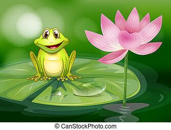 różowy, niezależnie, kwiat, żaba, staw