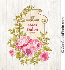 różowy, peony.