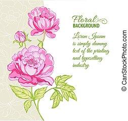różowy, piwonie, próbka, tło, tekst