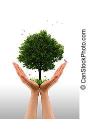 ręka, żywy, drzewo, -
